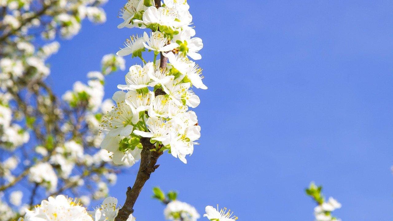 kukka vappu kevät